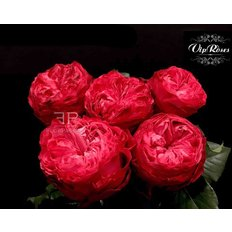 Red Garden Roses | Luxury Collection Vip Roses | Milan Florist