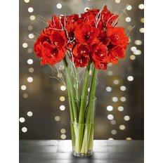 Bouquet Red Amaryllis | Christmas Flowers | Best Milan Florist