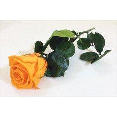 Rosa Amorosa Mini Stabilizzata Arancio