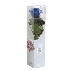 Rosa Amorosa Mini Stabilizzata Blu