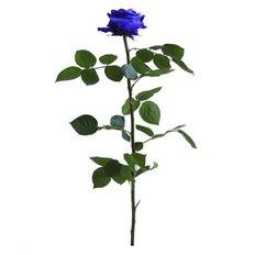 Rosa Amorosa Stabilizzata Blu