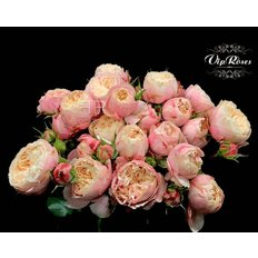 Victorian Classic Spray Roses